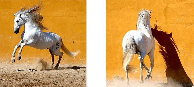 Fotovorlagen als Gemälde Auftragsarbeit