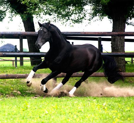 Pferdeshooting für Pferdegemälde